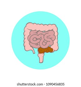 Small and large intestines. Constipation vector illustration.