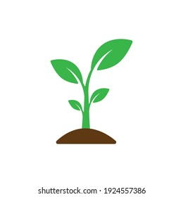 Small, leafy green seedlings on the ground. Vector drawing.