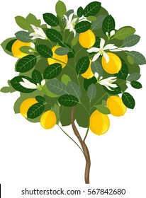 Small lemon tree with flowers