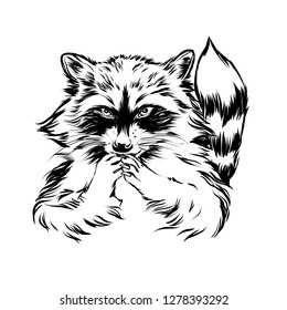 Small little insidious crafty racoon face. Wily outline animal character for print. Illustration for coloring book or post card. Sly mischievous coon.