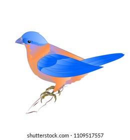 Small songbirdon Bluebird  thrush  on a white background vintage vector illustration editable hand draw