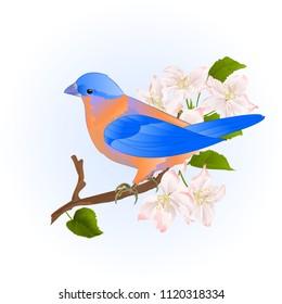 Small songbirdon Bluebird  thrush  on a branch apple tree vintage vector illustration editable hand draw