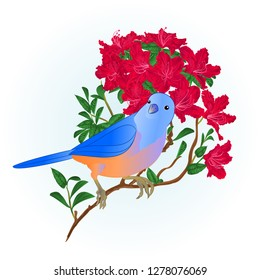 Small songbirdon Bluebird  thrush and red rhododendron spring background vintage vector illustration editable hand draw