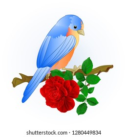 Small songbirdon Bluebird  thrush and red rose spring background vintage vector illustration editable hand draw
