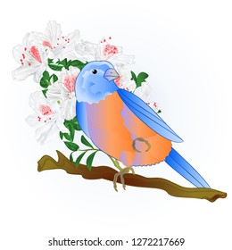 Small songbirdon Bluebird  thrush and white rhododendron spring background vintage vector illustration editable hand draw
