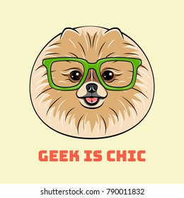 Smart spitz dog in glasses. Geek is chic. Vector illustration. Isolated.