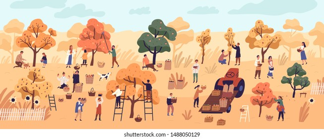 Smiling people gathering fruits in orchard or at farm. Cute happy young men and women picking apples in garden. Autumn harvest, seasonal agricultural work. Flat cartoon colorful vector illustration.