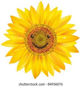 Smiling Sunflower, Isolated On White Background, Vector Illustration