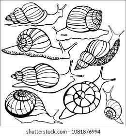 Snail ahatiny .