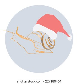 Snail in a Christmas hat . Vector illustration.