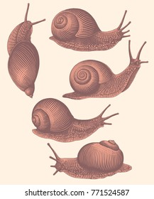 Snails. Design set. Hand drawn engraving. Vector vintage illustration. Isolated on light background. 8 EPS