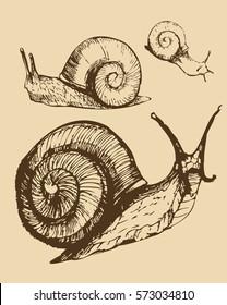 Snails sketch. Vector illustration