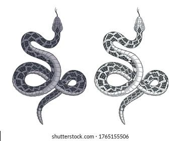 Snake attacks. Rattlesnake tattoo isolated on white vector illustration.