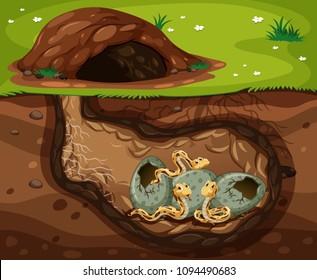 A Snake Living Under the Hole illustration