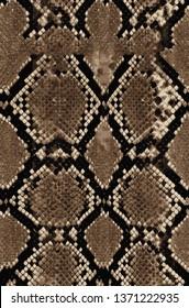 Snake pattern Draw