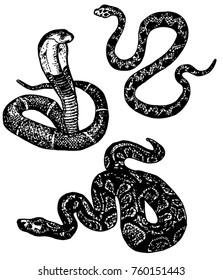 Snake sketch. Set of various snake: cobra, python. Black and white hand drawn collection serpent. Vector illustration.