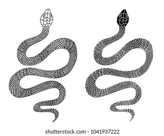 snake tattoo style vector illustration.Lampropeltis triangulum vector.Sticker and hand drawn snake for tattoo.snake Reptile illustration.
