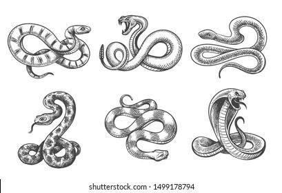 Snakes sketch. Black hand drawn snake set isolated on white, vector viper desert snake efa, cobra and boa constrictor, engraved poison rattlesnake and royal python