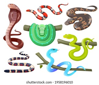 Snakes, wild tropical serpents isolated on white background. Cobra, california mountain kingsnake, green tree and ball python, trimeresurus salazar and insularis. Vector cartoon set of exotic reptiles