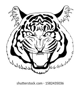 Snarling face of a tiger, isolated on white background, vector illustration