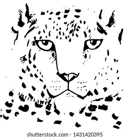 snow leopard ounce, large cat native to the mountain ranges of Asia ranging from eastern Afghanistan to Mongolia and western China. Black sketch markers, freehand drawing isolated on white. Vector