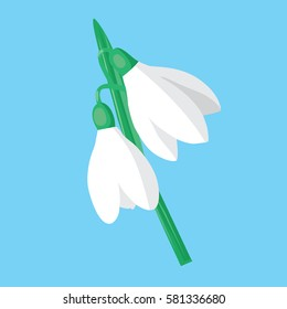 Snowdrops on a blue background.