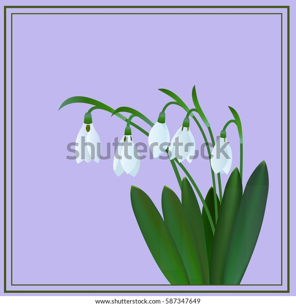 Snowdrops on a purple background in the frame