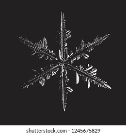 Snowflake glittering on black background. Vector illustration based on macro photo of real snow crystal: complex stellar dendrite with fine hexagonal symmetry, ornate shape and six thin, elegant arms.