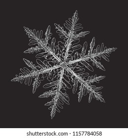 Snowflake isolated on black background. This vector illustration based on macro photo of real snow crystal: beautiful stellar dendrite with hexagonal symmetry, complex shape and six elegant arms.