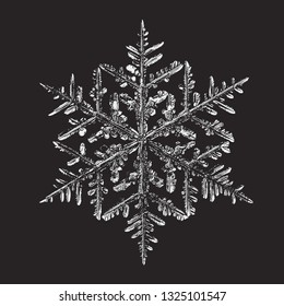 Snowflake isolated on black background. Vector illustration based on macro photo of real snow crystal: beautiful stellar dendrite with complex, elegant arms, ornate shape and glossy, relief surface.