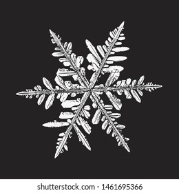 Snowflake isolated on black background. Vector illustration based on real snow crystal at high magnification: elegant stellar dendrite with six thin, fragile arms, ornate shape and complex details.