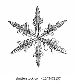 Snowflake isolated on white background. Vector illustration based on macro photo of real snow crystal: elegant stellar dendrite with fine hexagonal symmetry, ornate shape and complex inner details.