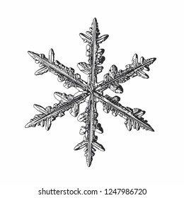 Snowflake isolated on white background. Vector illustration based on macro photo of real snow crystal: elegant stellar dendrite with fine hexagonal symmetry, ornate shape and complex inner structure.