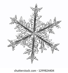 Snowflake isolated on white background. Vector illustration based on macro photo of real snow crystal: elegant stellar dendrite with fine hexagonal symmetry, ornate arms and glossy, relief surface.