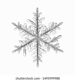 Snowflake isolated on white background. Vector illustration based on real snow crystal: elegant stellar dendrite with fine hexagonal symmetry, thin, fragile arms, ornate shape and complex details.