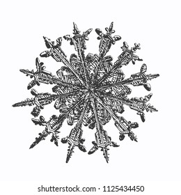 Snowflake on white background. This vector illustration based on macro photo of real snow crystal: unusual, rare specimen with twelve thin, elegant arms, fine symmetry and complex inner structure.