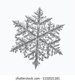 Snowflake on white background. This vector illustration based on macro photo of real snow crystal: complex stellar dendrite with fine hexagonal symmetry, ornate shape and six thin, elegant arms.