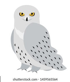 Snowy owl. Polar owl. Vector graphics isolated on white background.