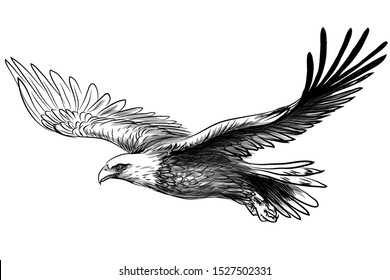 Soaring bald eagle. Graphic, black and white drawing sketch of a bird of prey on a white background.