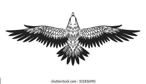 Soaring bird of prey. Vector hand drawn illustration.