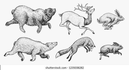 Soaring Hare Rabbit northern brown Bear Deer. Set of Wild forest animal jumping up. Vintage style. Engraved hand drawn sketch.