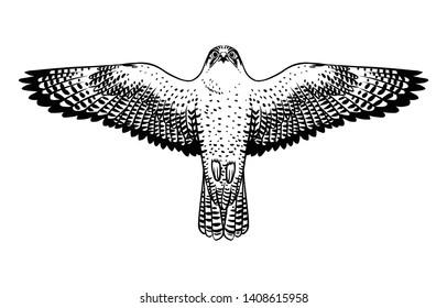 Soaring peregrine falcon. Vector hand drawn illustration