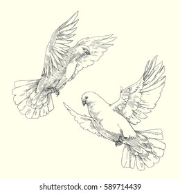 Soaring white pigeons. Engraved birds in flight isolated on white. Vector hand drawn vintage illustration of flying doves