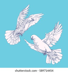 Soaring white pigeons in the sky. Isolated flying birds painted in the sketch style. Graphic hand drawn vintage illustration of flying doves.
