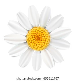 Soft pastel color floral 3d illustration on white background. Yellow wild camomile flowers and petals watercolor style vector summer template. Eco organic pattern