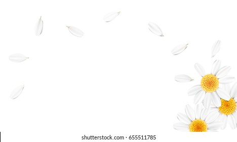 Soft pastel color floral 3d illustration on white background. Yellow wild camomile flowers and petals watercolor style vector illustration template. Eco organic pattern