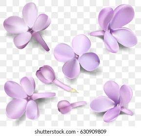 Soft pastel color floral collection isolated on transparent background. Purple Lilac flowers and petals watercolor compositions set, vector illustration template