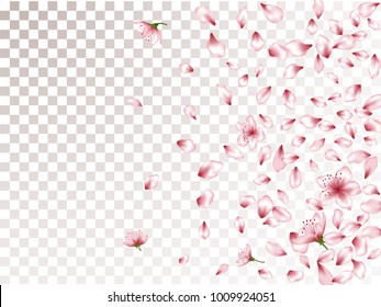 Soft peach or chinese cherry blossom petals blowing flying, flower elements falling vector illustration. Spring petals and pink flower vector elements confetti falling design.