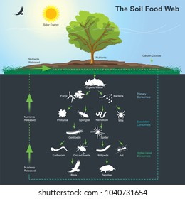 The soil food web is the community of organisms living all or part of their lives in the soil. It describes a complex living system in the soil and how it interacts with the environment, plants