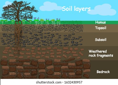 Soil layers. Diagram for layer of soil. Soil layer scheme with grass and roots, earth texture and stones.Cross section of humus or organic and underground soil layers beneath.Stock vector illustration